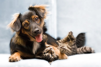 dog-cat-friends