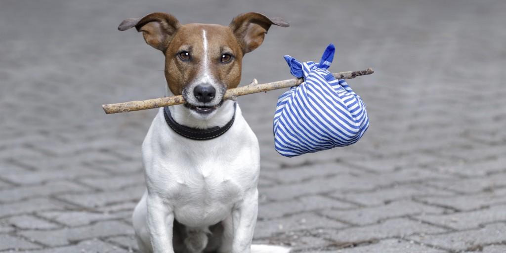 o-LOST-DOG-facebook