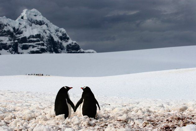 010CATERS-Penguins-Holding-Hands-01_220239