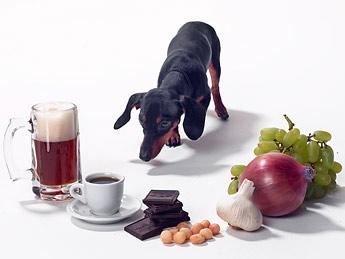 dog-poison
